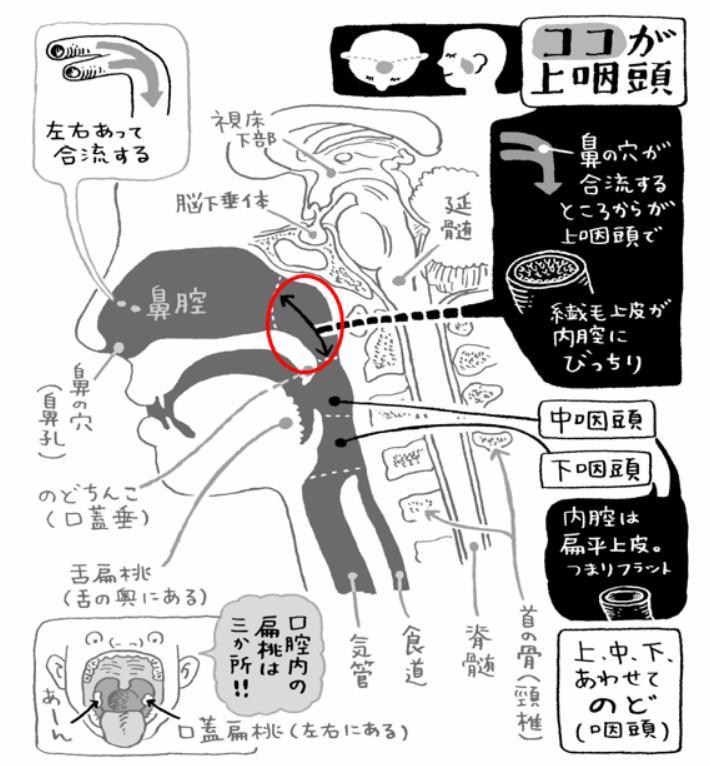 堀田修「病気が治る鼻うがい健康法」2011年KADOKAWA