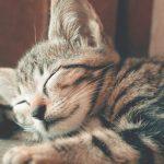 睡眠の質が上がって朝からスッキリ生まれ変わるファスティングの効果